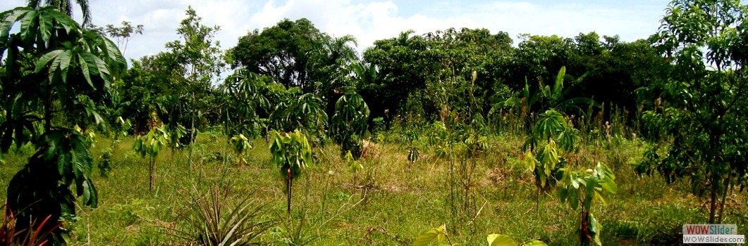 Forestation project in San Antonio de los Lagos - 2011.
